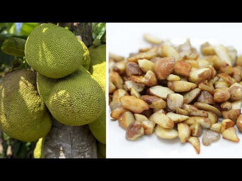 How to Cook Jackfruit seeds | Easy Jackfruit Seeds Recipe