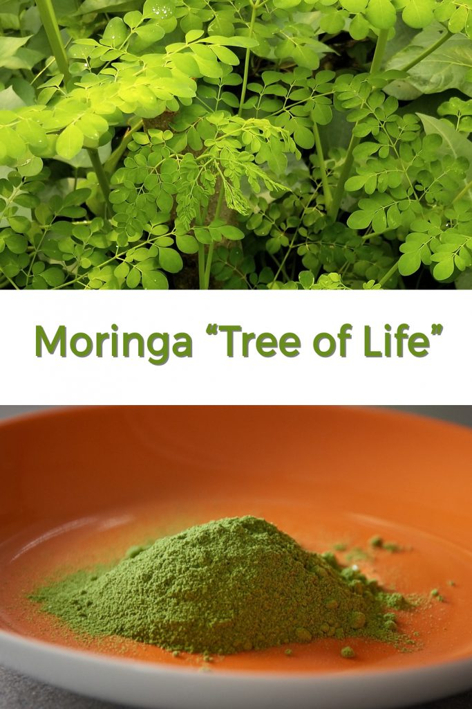 Moringa Tree of Life pin for Pinterest