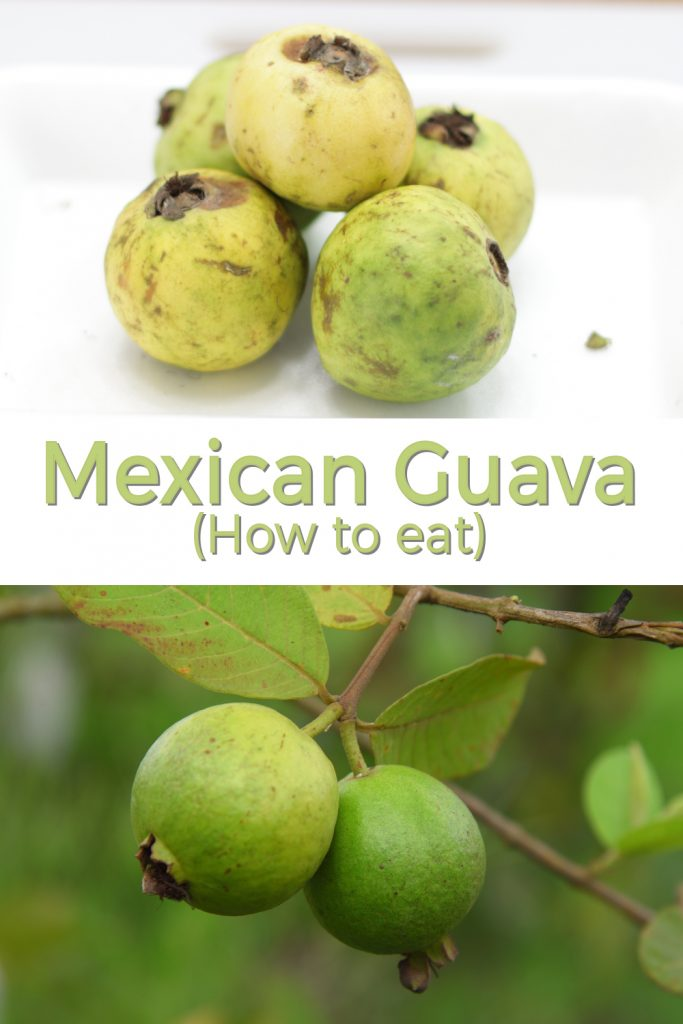 Mexican Guava pin for Pinterest
