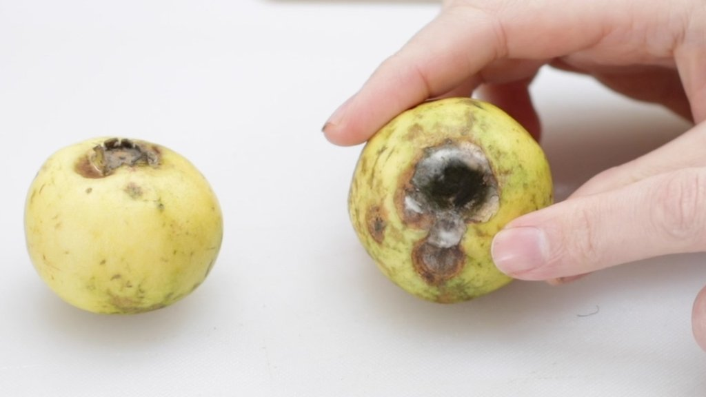 Moldy Mexican guava on a white cutting board