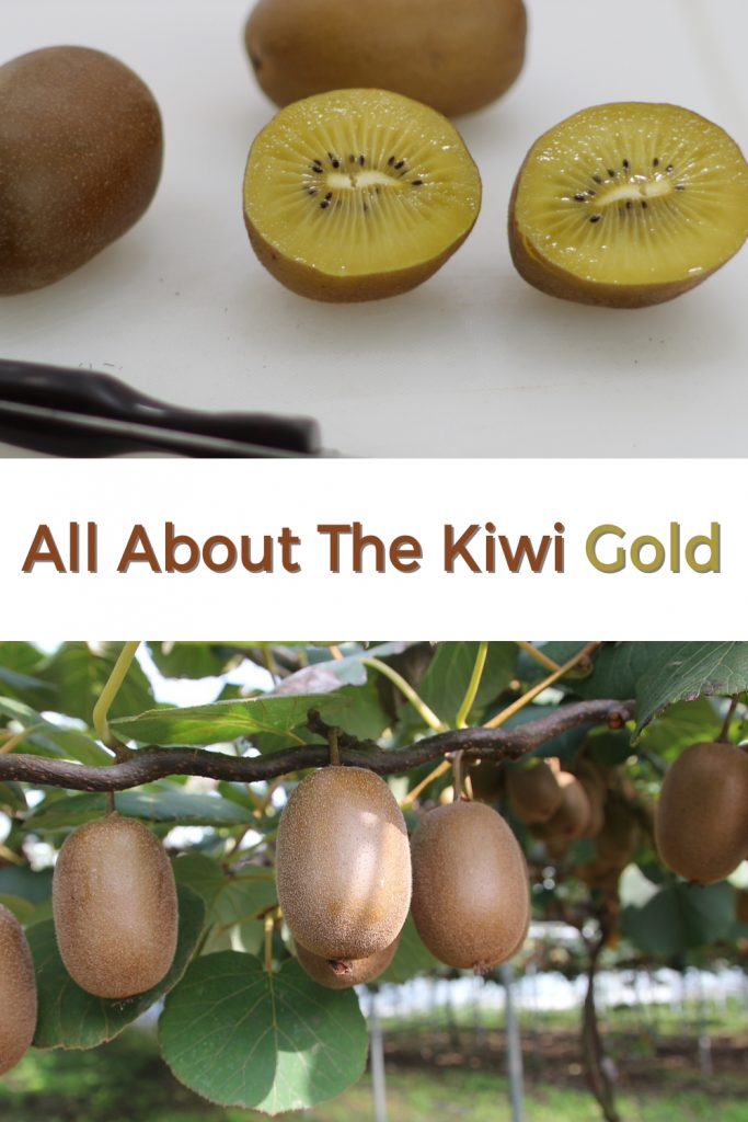 All about the kiwi gold fruit pin for Pinterest